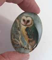 Barn Owl in teal cameo