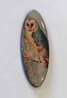 Barn Owl long oval